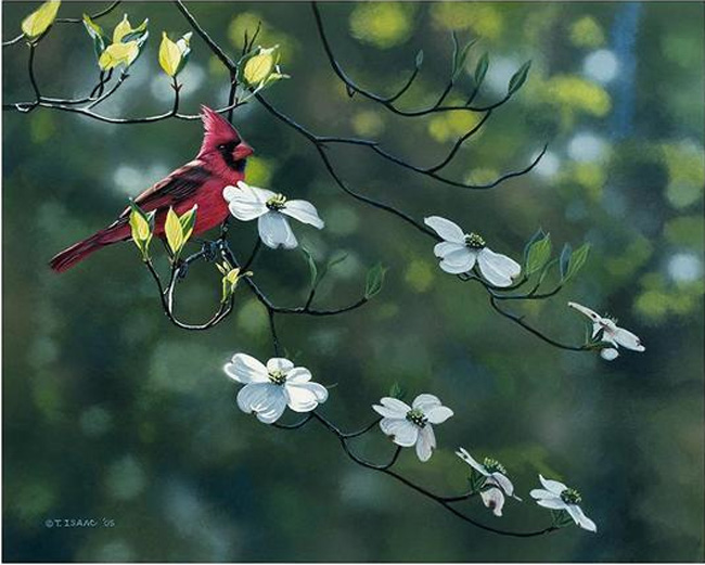 Terry Isaac Cardinal and Dogwood