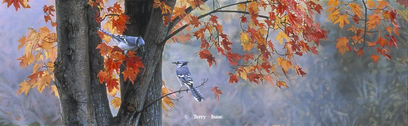 Terry Isaac Fall Colors