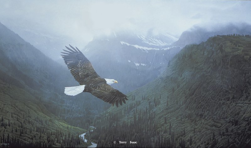 Terry Isaac Into The Mist Eagle