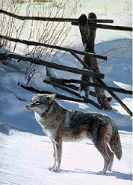 Terry Isaac Rail Fence Coyote