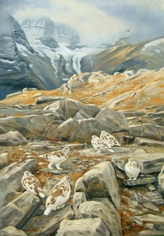 Norman Kelly Golden Eagle and Ptarmigan