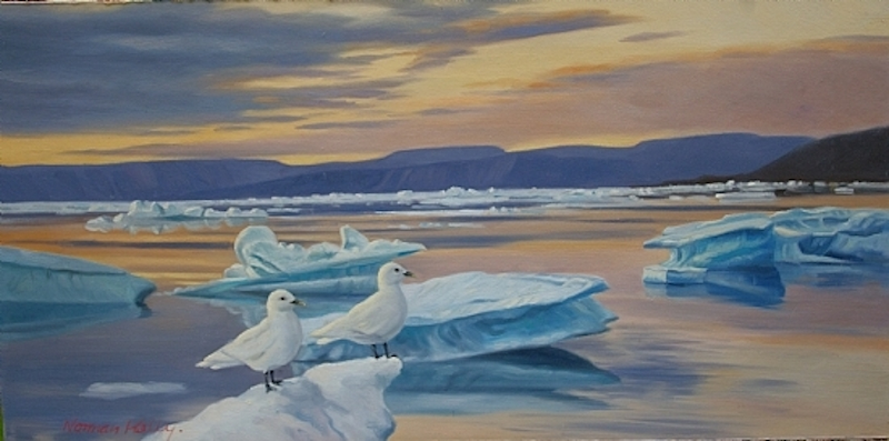 Norman Kelly Ivory Gull Pair