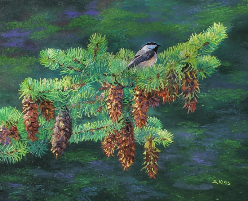 Andrew Kiss Chickadee On Fir Tree