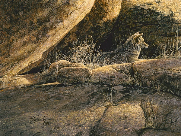 Stephen Lyman Coyote Afternoon