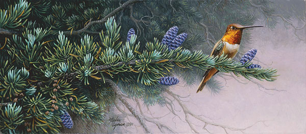Stephen Lyman Rufous Hummingbird and Mountain Hemlock