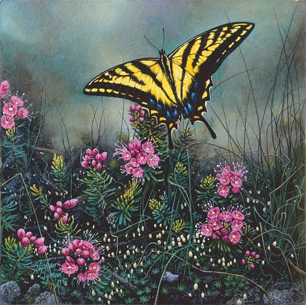 Stephen Lyman Swallowtail Butterfly