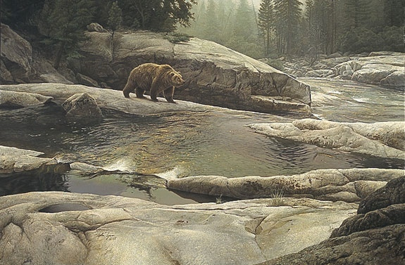 Stephen Lyman Great Bear Of Yosemite Park