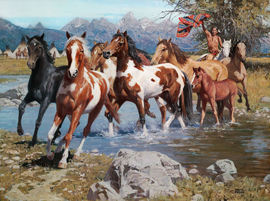 David Mann Native Wealth