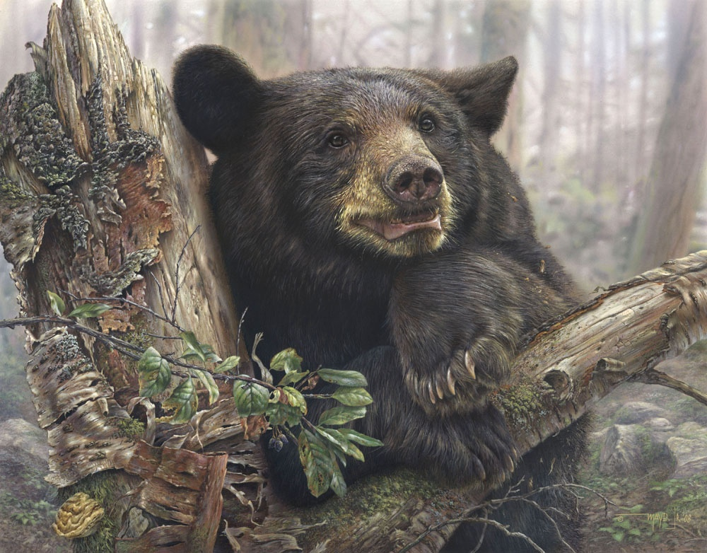 Denis Mayer Home Sweet Home Black Bear