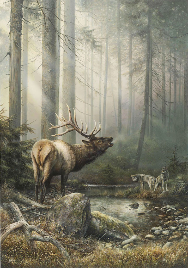 Denis mayer Echo in the Mist Elk Wolves