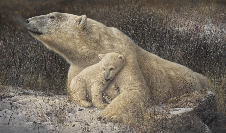 Denis mayer A Time To protect Polar Bears