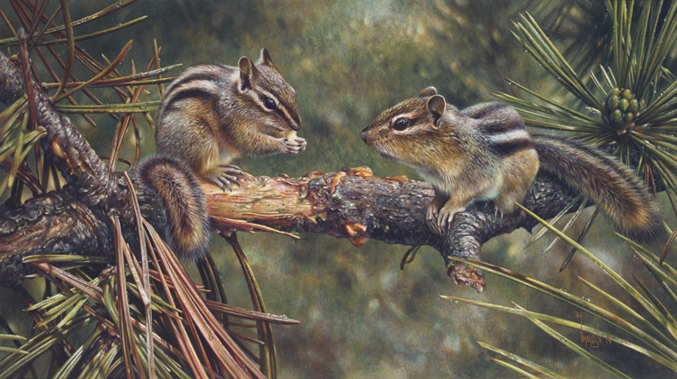 Denis Mayer Twin Foragers  Chipmunks