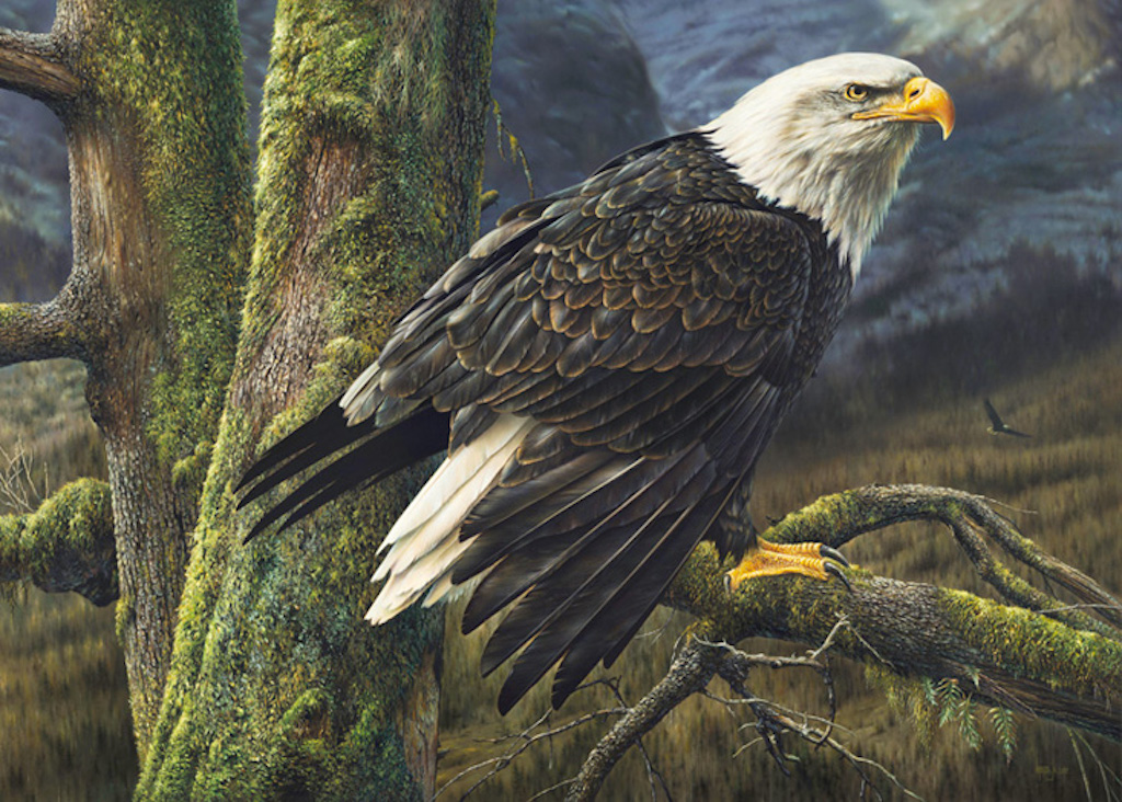 Denis Mayer Ruler of the Skies Bald Eagle