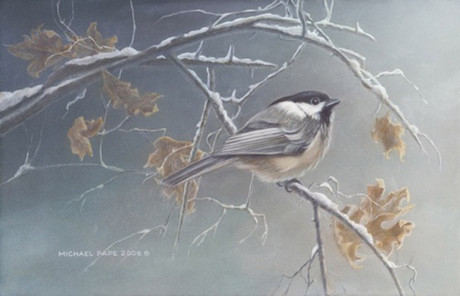 Michael pape Chickadee