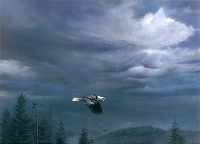 Michael pape Through The Storm Bald Eagle