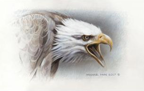 Michael Pape Bald Eagle Study