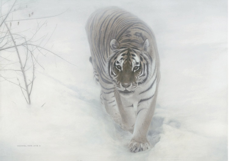 Michael Pape Out Of The Mist Amur Tiger