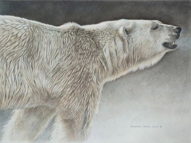 Michael Pape Polar bear Study