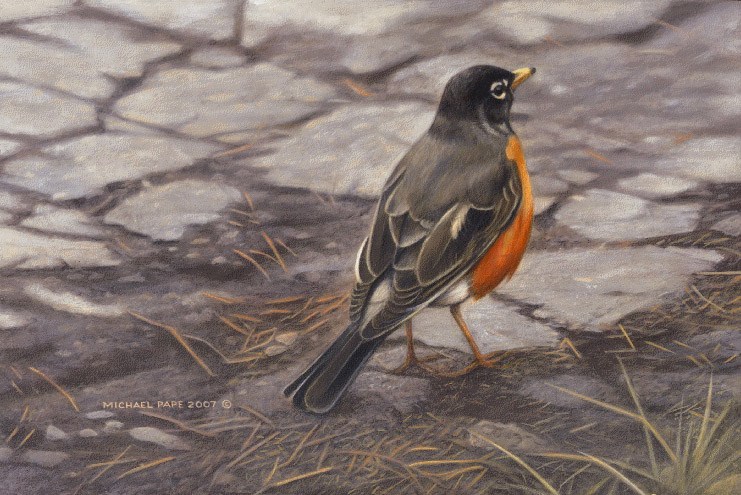 Michael Pape Secret Path American Robin