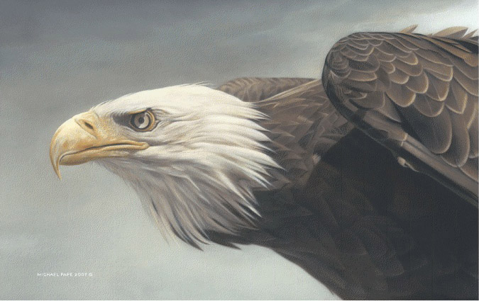 Michael pape Bald Eagle Vantage point