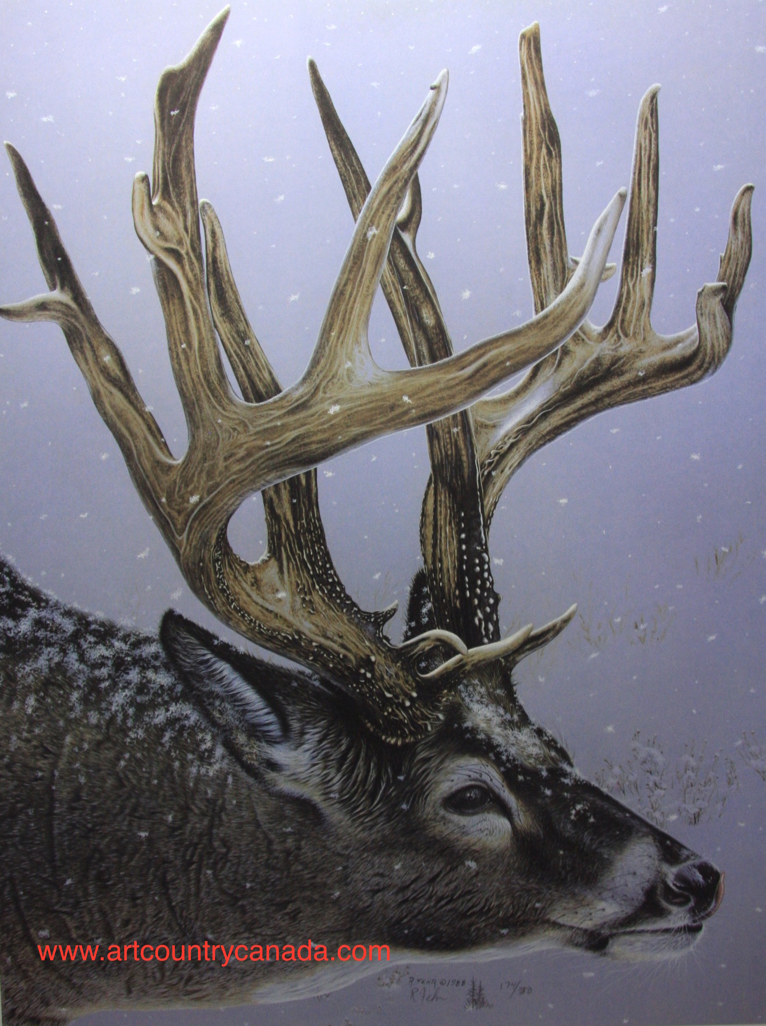 randy fehr north american whitetail
