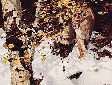 John Seerey-Lester early Snow Cougar