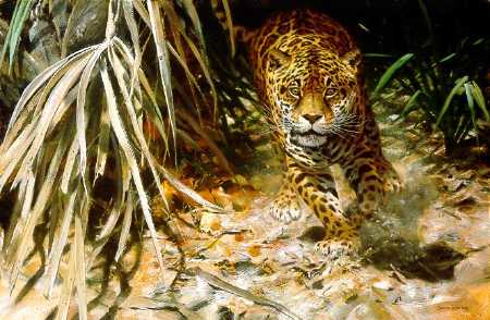 John Seerey-Lester Into the Clearing Jaguar