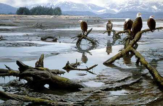 John Seerey-Lester Low Tide Bald Eagles