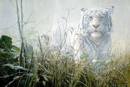 John Seerey-Lester Monsoon White Tiger