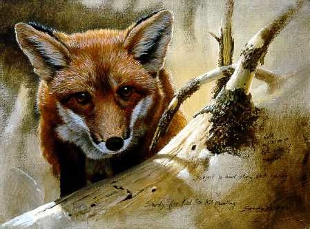 John Seerey-Lester Red Fox Kit Study