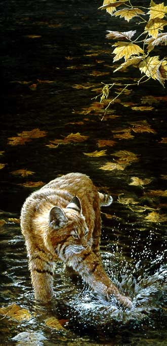 John Seerey-Lester Watersport Bobcat