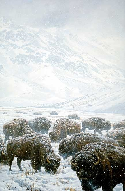 John Seerey-Lester Winter Grazing Bison