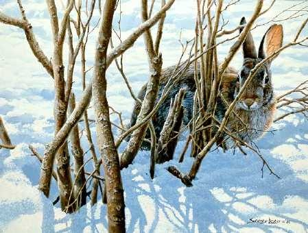 John Seerey-Lester Winter Hiding Cottontail