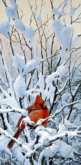 John Seerey-Lester Winter Perch