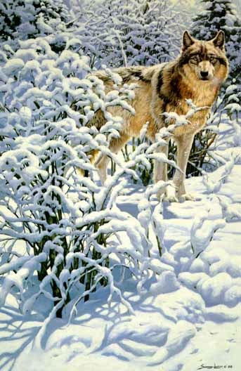 John Seerey-Lester Winter Spirit Gray Wolf