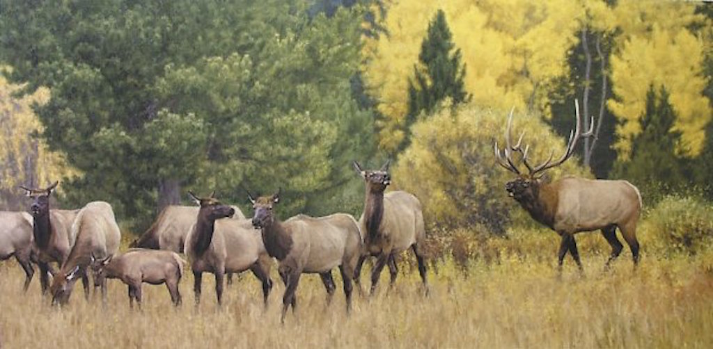 Kyle Sims The Melodramatics of Fall Elk