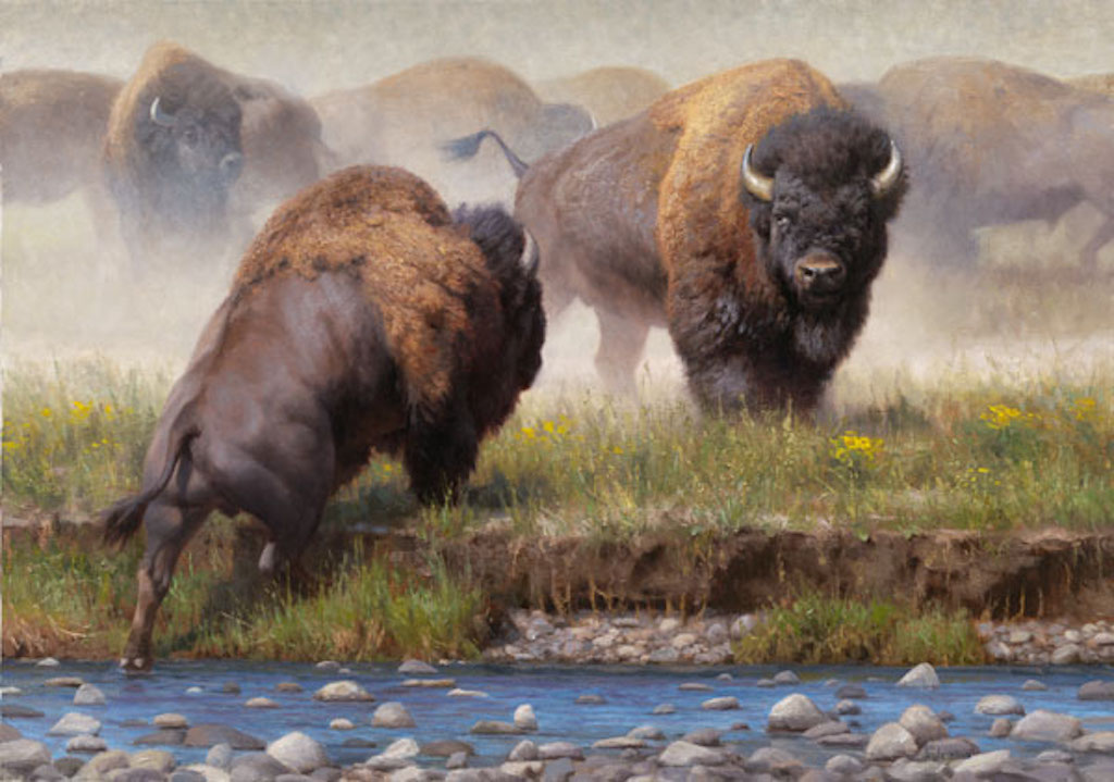 Kyle Sims Yellowstone Face Off Bison