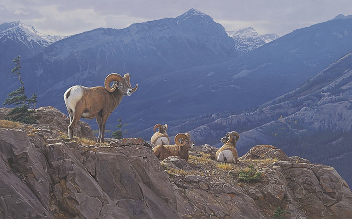 Daniel Smith Epic Heights Bighorn Sheep