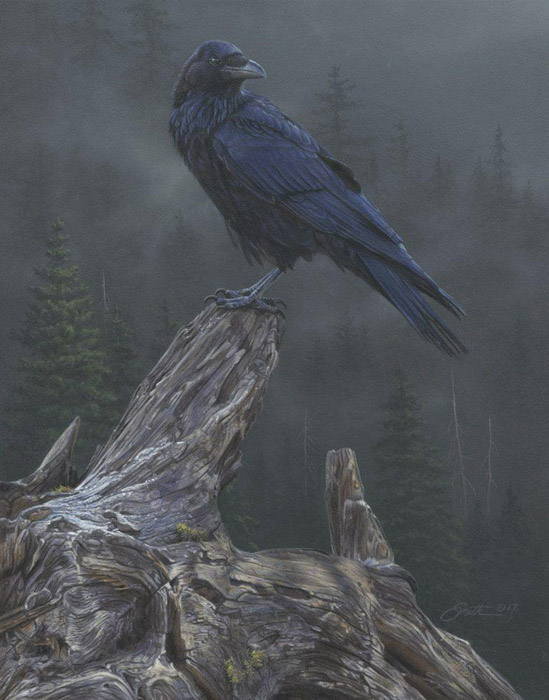 Daniel Smith Raven's Roost