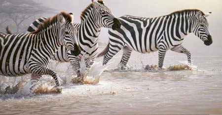 Daniel Smith Risky Crossing Zebras