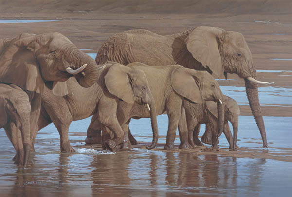 Daniel Smith Riverbank procession Elephants