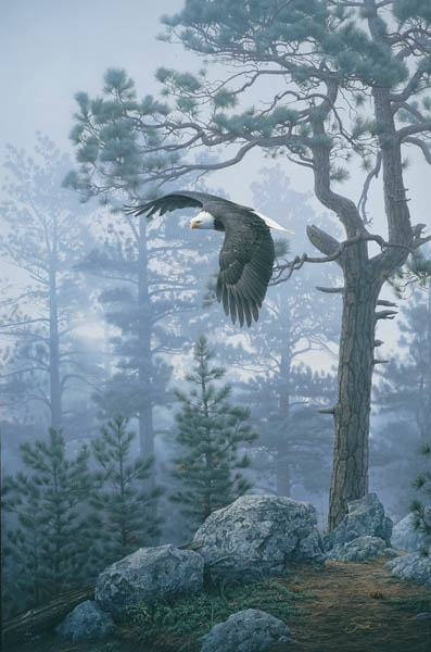 Daniel Smith Shrouded Forest Bald Eagle
