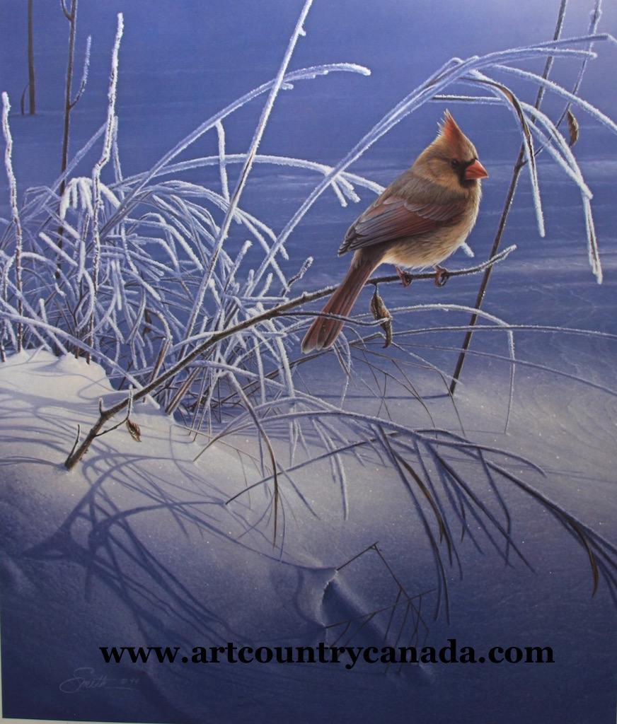Daniel Smith Snow Song Cardinal