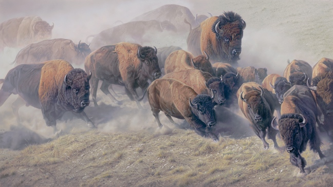 Daniel Smith Thunder and Dust Bison