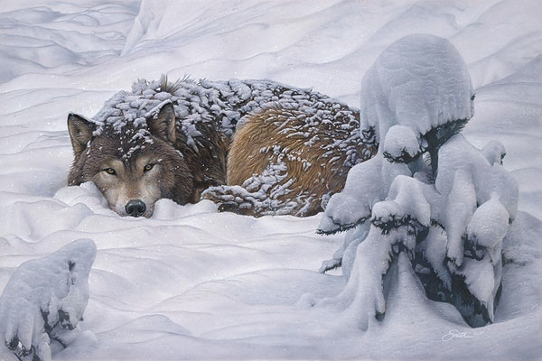 Daniel Smith Winter's Embrace Wolf