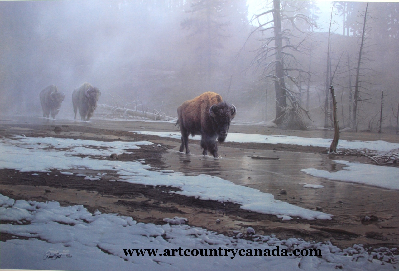 Daniel Smith Yellowstone Procession Bison