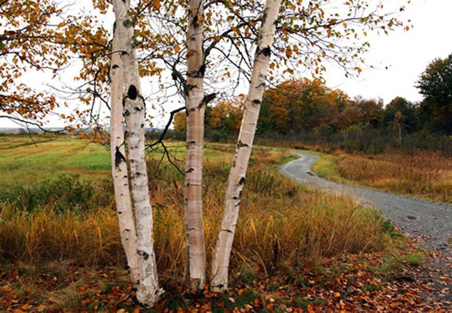 Alicia Soave The Birches