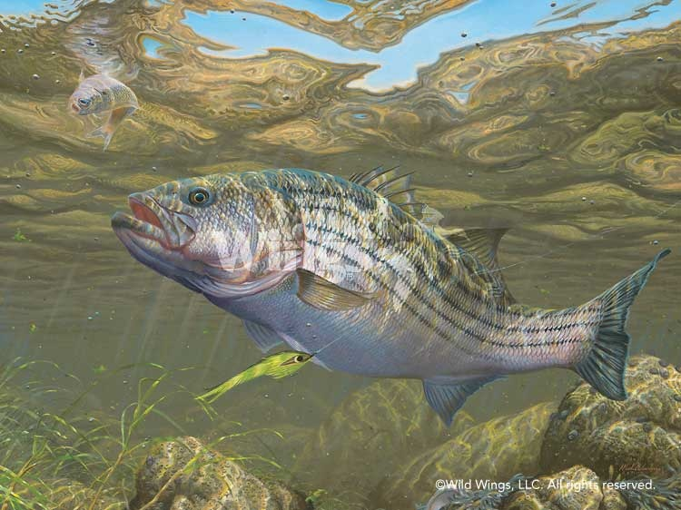 how to fish pike and bass in the fall