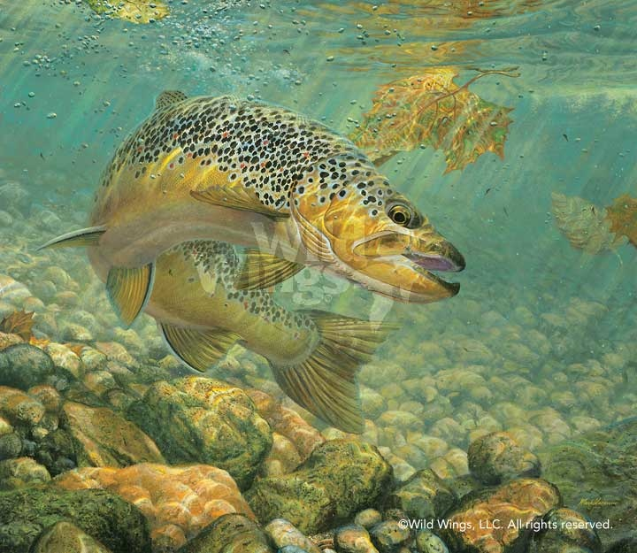 Mark Susinno Duped Brown Trout