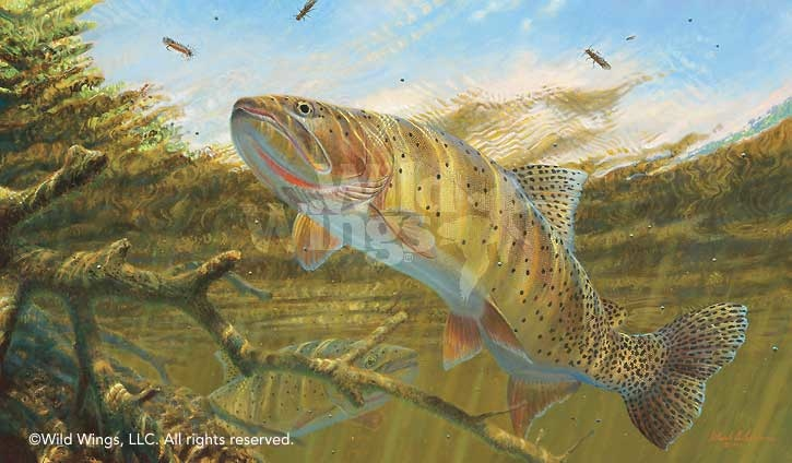 Mark Susinno Match The Hatch Cutthroat Trout